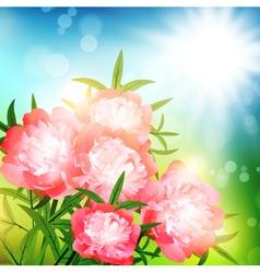 Peony flowers vector