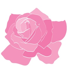 Rose Pink vector image