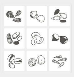 Nut icons set vector image vector image