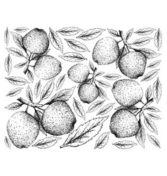 hand drawn of apple fruits on white background vector image