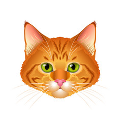 Red cat realistic portrait isolated vector