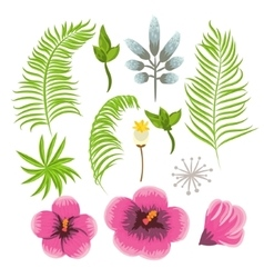 set exotic tropical flowers and palm leaves vector image