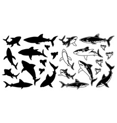 set of monochrome shark silhouettes sea vector image