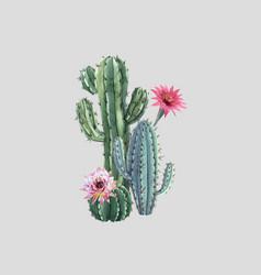 Beautiful watercolor cactus combination vector