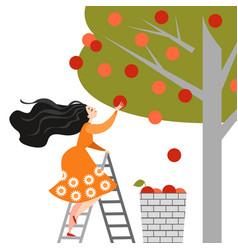 Happy cartoon girl is picking apples in garden vector