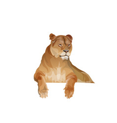 Lioness resting image in realistic style vector