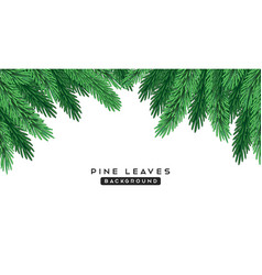 pine leaves green color isolated on white vector image