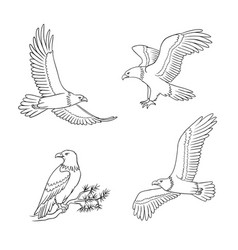 set bald eagles in outlines vector image