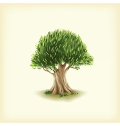Color of the olive tree vector image vector image