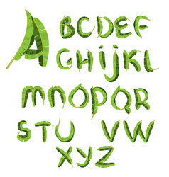 Tropical alphabet made of banana palm leaves vector
