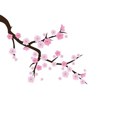 blooming cherry 2 vector image