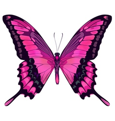Beautiful Pink Butterfly vector image