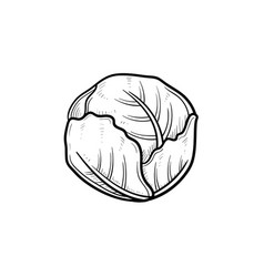 Cabbage hand drawn sketch icon vector