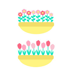 daisies and marguerites tulips springtime flowers vector image