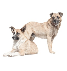 Drawing two dogs vector