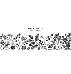 hand drawn berries botanical background wild vector image