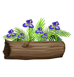 Iris flowers and wooden log on white background vector