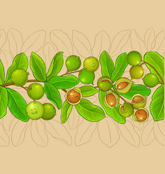 macadamia branches pattern vector image