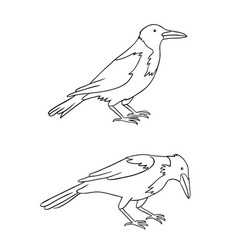 two grey crows in contours vector image