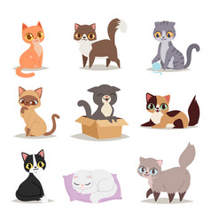 cute cats character different pose vector image vector image