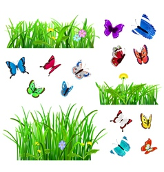 Green grass and butterflies vector image