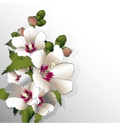 White mallow flowers vector image vector image
