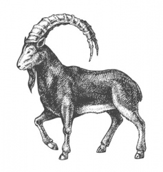 goat drawing vector image vector image