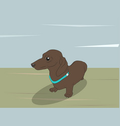 a dachshund that sits on the vector image