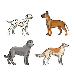 Dogs different breeds in color set3 vector