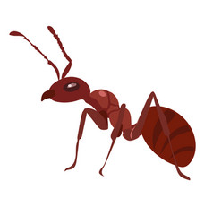 Fire ant vector