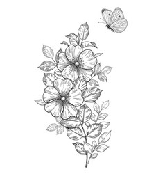 hand drawn dog-rose branch with flying butterfly vector image