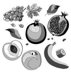 set grapes pomegranate vector image