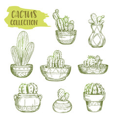 sketches of mexican cactus plant vector image