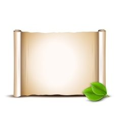 Old scroll and green leaves isolated on white vector image