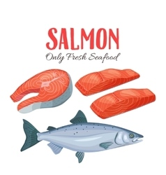 Set salmon vector image