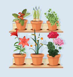 flowers at shelves decorative tree plants grow in vector image