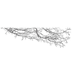 hand drawing branch 2 vector image