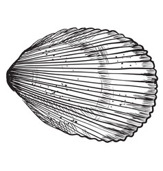 hand drawing seashell-6 vector image
