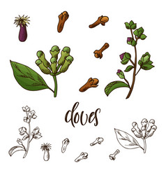 hand drawn cloves herb decorative element in vector image