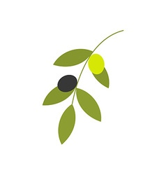 Olive Branch 380x400 vector