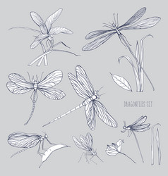 Set of various dragonflies in different poses vector