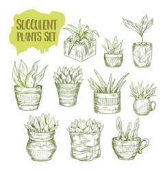 sketch succulent plant vector image