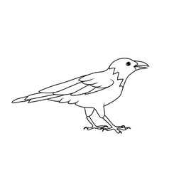 coloring book crow or raven vector image