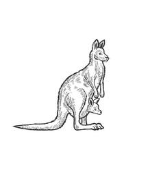 kangaroo with cub animal sketch engraving vector image