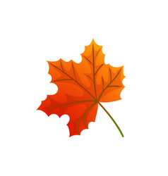 maple leaves and autumnal symbol isolated icon vector image