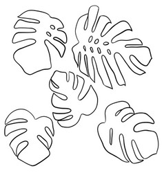 monstera leaves set tropical leaves silhouette vector image