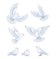 set white pigeons vector image