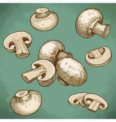 Engraving champignons set retro vector