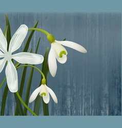 floral background spring flowers vector image vector image