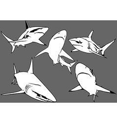Blacktip Reef Shark vector image